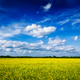 Spring summer background - canola field with blue sky - PhotoDune Item for Sale