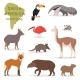 Animals in South America - GraphicRiver Item for Sale