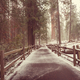 Sequoia forest in winter season - PhotoDune Item for Sale