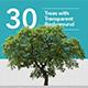 Tree Transparent - GraphicRiver Item for Sale