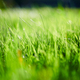 Green grass background meadow - PhotoDune Item for Sale