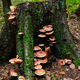 Old stump covered with moss and mushrooms - PhotoDune Item for Sale