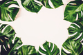 Tropical leaves Monstera on colorful background - PhotoDune Item for Sale