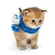 Little red kitten in blue scarf - PhotoDune Item for Sale