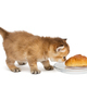 Little kitten sniffing a bun - PhotoDune Item for Sale