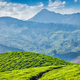 Tea plantations, Munnar, Kerala state, India - PhotoDune Item for Sale