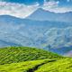 Tea plantations, Munnar, Kerala state, India - PhotoDune Item for Sale