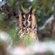 Owl sit in a tree and looking on the the camera - PhotoDune Item for Sale