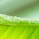 Green leaf with water drops - PhotoDune Item for Sale