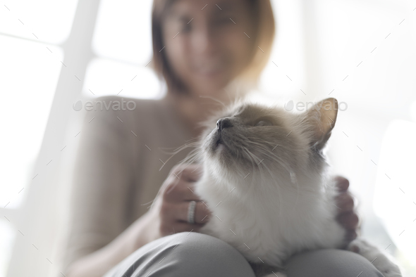 Woman holding a cute cat on her lap - Stock Photo - Images