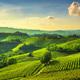 Langhe vineyards view, Castiglione Falletto and La Morra, Piedmo - PhotoDune Item for Sale