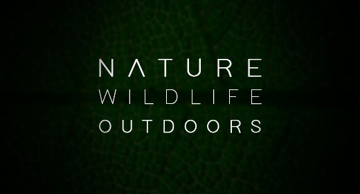 Nature, Wildlife and Outdoors Cinematic Collection