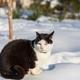 Cat in winter season - PhotoDune Item for Sale