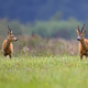 Buck deers in a clearing - PhotoDune Item for Sale