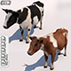Cow - Low Poly & High Ploy - with - Sound effects - 3DOcean Item for Sale