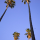 Four tall palms - PhotoDune Item for Sale