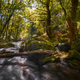 Trunk fallen through a river - PhotoDune Item for Sale