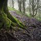 Twisted and mossy roots of a centennial holly tree - PhotoDune Item for Sale