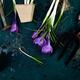 Gardening tools, peat pots, crocus flower. spring - PhotoDune Item for Sale