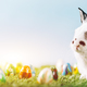 White bunny and eggs on spring background. - PhotoDune Item for Sale