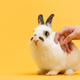 Hand petting white bunny on yellow background. - PhotoDune Item for Sale