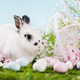 Bunny and Easter decorations on spring background. - PhotoDune Item for Sale