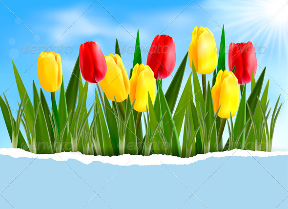 Colorful Flower Background - Flowers & Plants Nature