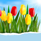 Colorful Flower Background - GraphicRiver Item for Sale