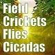 Field Summer Crickets Flies