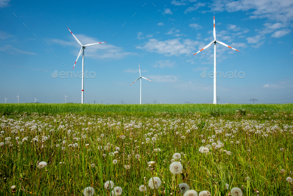 Wind power plants and dandelion flowers - Stock Photo - Images