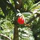redberrysounds
