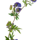 Medicinal plant: Aconite - PhotoDune Item for Sale