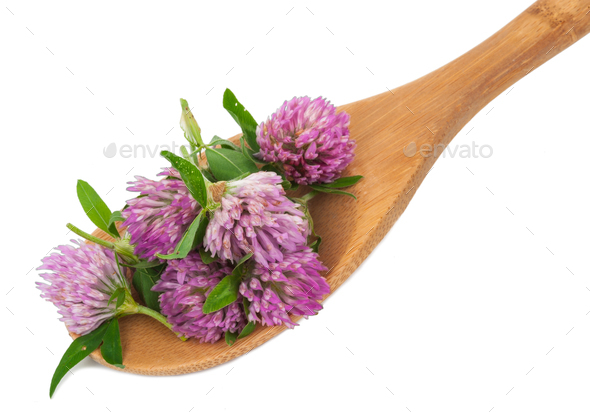 Clover flower tea on the wooden spoon - Stock Photo - Images