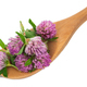 Clover flower tea on the wooden spoon - PhotoDune Item for Sale