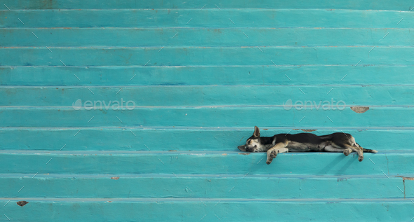 Lazy dog sleeping on colorful steps in Honduras. - Stock Photo - Images