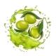 Olive Branch in Realistic Olive Oil Splash - GraphicRiver Item for Sale