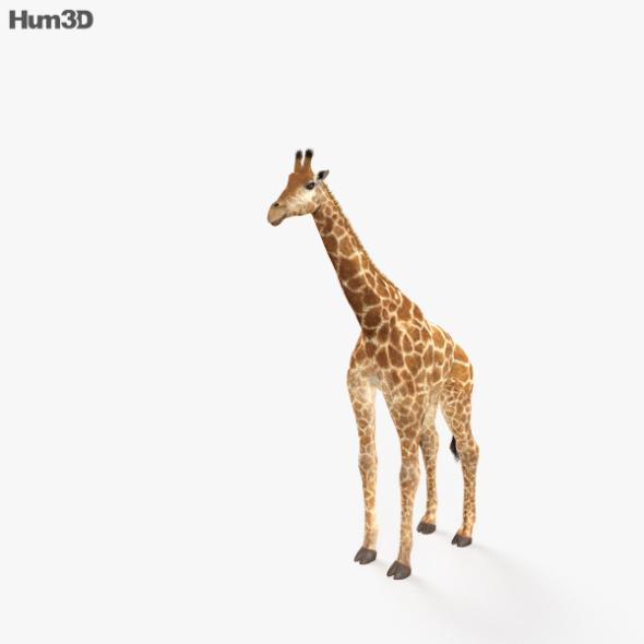 Giraffe HD