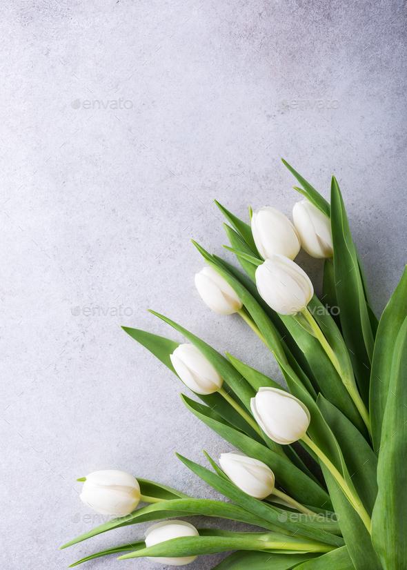 Beautiful White Tulips Stock Photo By