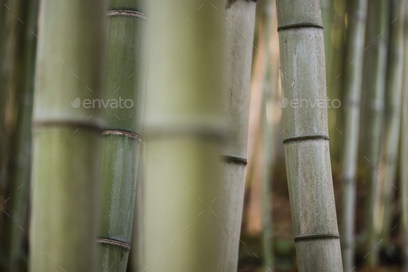 bamboo stems in the shadow. - Stock Photo - Images