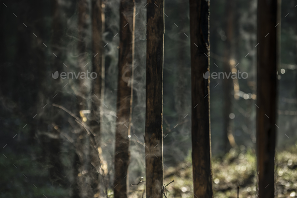 Water evaporation from bamboo stems in morning sun. - Stock Photo - Images