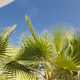 Palm trees in the blue sunny sky - PhotoDune Item for Sale