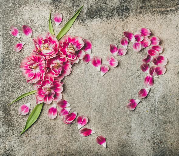 Heart shape frame made of pink tulip flower petals