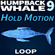 Humpback Whale 9 - VideoHive Item for Sale