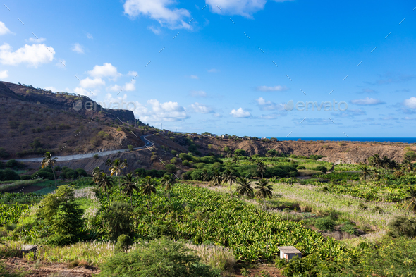 Coconut and sugar canne plantation near Calheta Sao Miguel in S - Stock Photo - Images