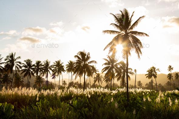 Sunset on coconut and sugar canne plantation near Achada Fazenda - Stock Photo - Images