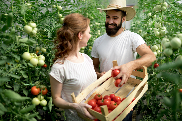 Woman and man in tomato plant at hothouse - Stock Photo - Images