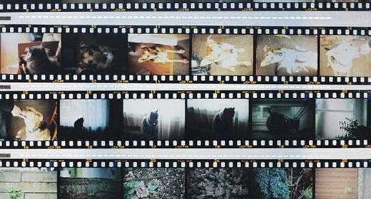 Film Web Sitesi