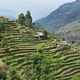 Fields and wooden houses in Nepal - PhotoDune Item for Sale