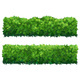 Green Fence From Boxwood Shrubs - GraphicRiver Item for Sale