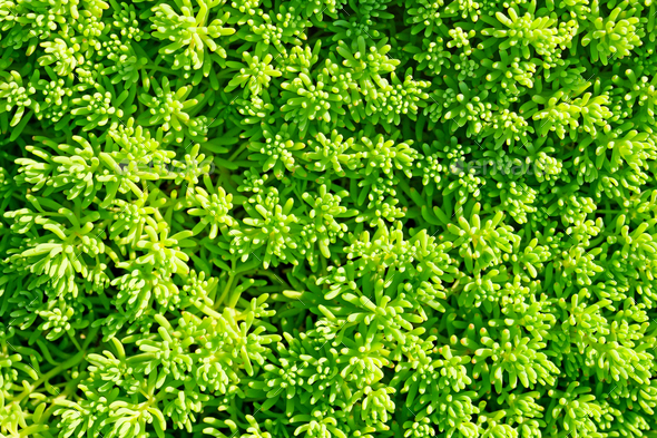Green decorative grass background - Stock Photo - Images